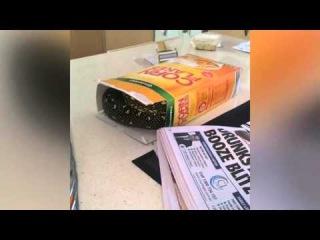 Австралиец Джарред Смит нашел двухметрового ромбического питона в коробке из-под хлопьев
