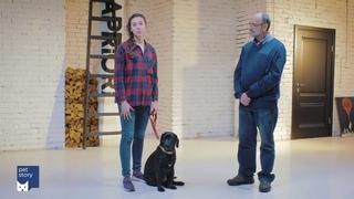 """Как научить собаку команде """"Рядом""""?"""
