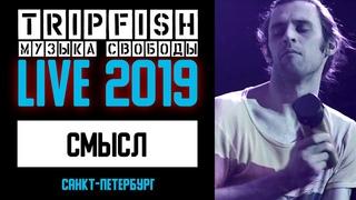 TripFish - LIVE - Смысл