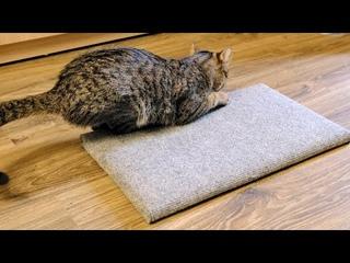 2 в 1, когтеточка и лежанка для кошки за 15 минут