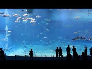 Японский океанариум (Токио)