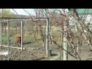 Купить уютный дом со всеми удобствами 80 м. кв., в ст. Азовская Северский район Краснодарский край.