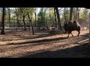 Видео от Живой уголок СКАЗКА Самара