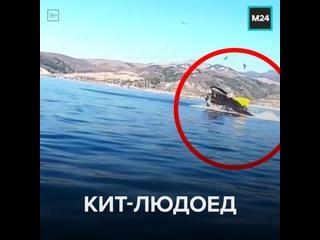 В США горбатый кит чуть не проглотил двух туристок – Москва 24