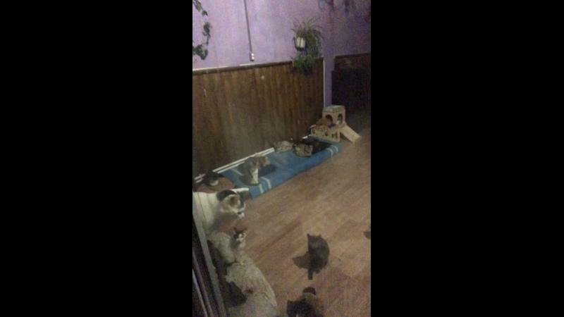 Видео от Приют Клеопатра г Омск