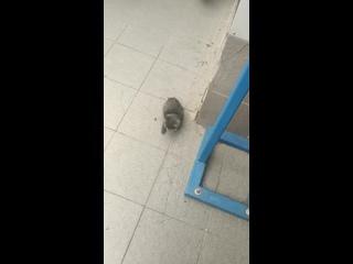 Video by Новый ковчег. Помощь бездомным животным.