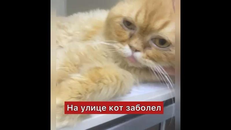 Видео от Дом котиков Котэдж