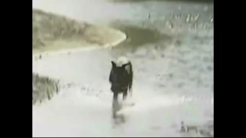 Всем собака породы Доберман посвящается
