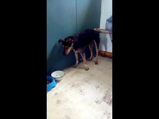 Video by Faya Shakirova