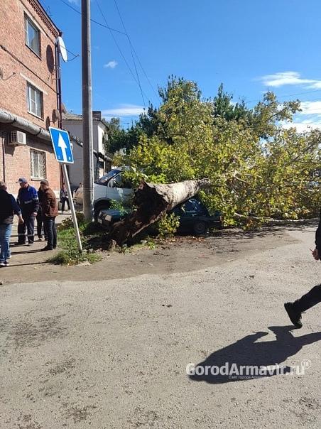 В Армавире упавшее из-за ветра дерево повредило пр...