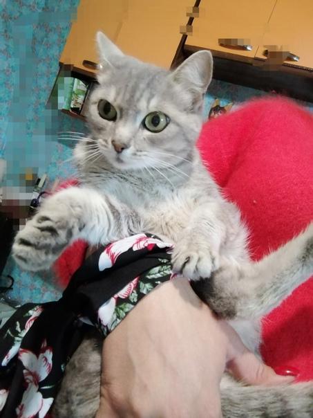 Отдам в ответственные добрые руки взрослую кошку. ...