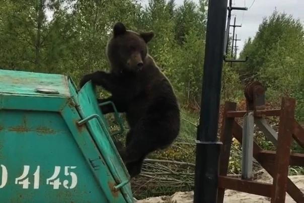 Житель Нижневартовска Виталий Петров встретил на о...